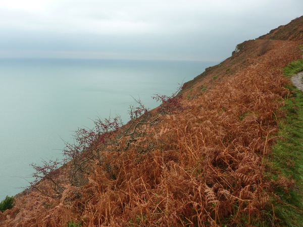 Coastal Path 3